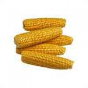 Fresh Corn Yellow 4 Ear PKG product image