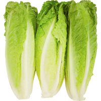 Lettuce Garden Hearts of Romaine Bunch 3CT PKG product image