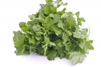 Cilantro 1 Bunch Fresh product image